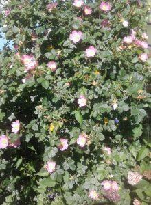 Bilde av sommerblomster